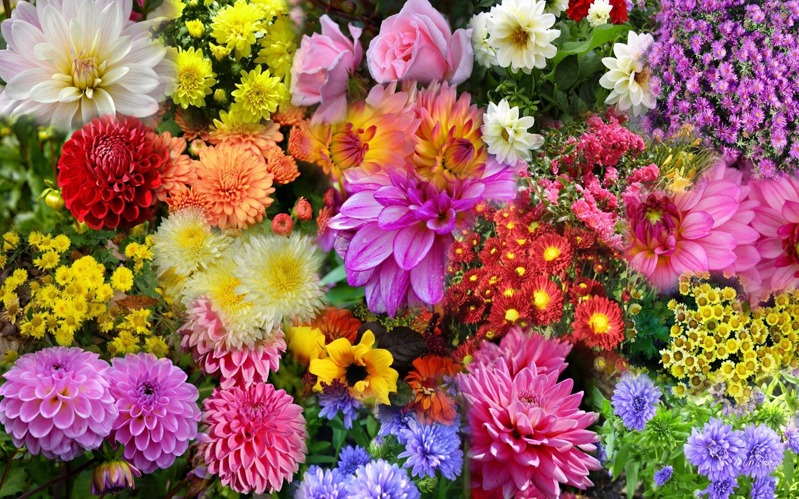 Wallpaper Hd Nature Flower Photo - Autumn Flowers Desktop Backgrounds , HD Wallpaper & Backgrounds