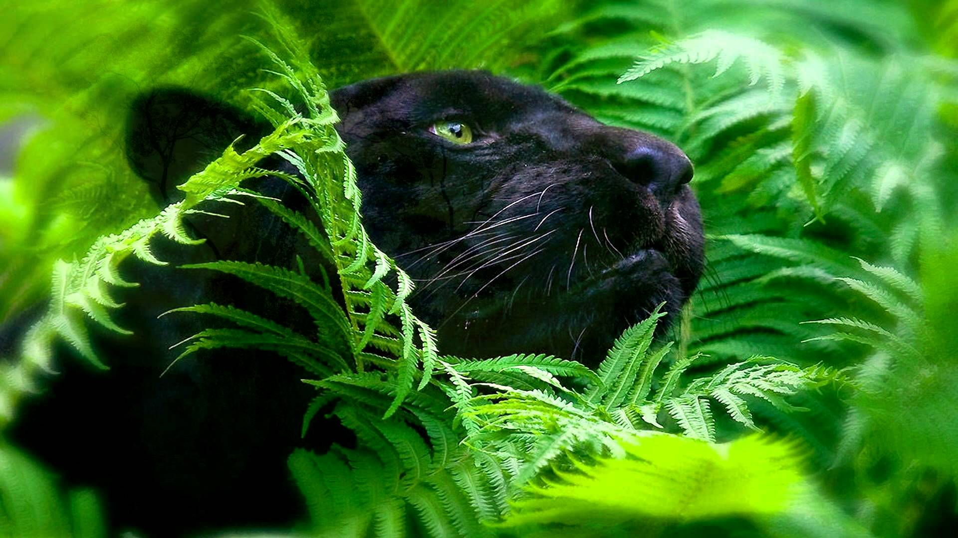 Rainforest Sounds And Animals Hour Soothing Audio For - 4k Ultra Hd Animals , HD Wallpaper & Backgrounds