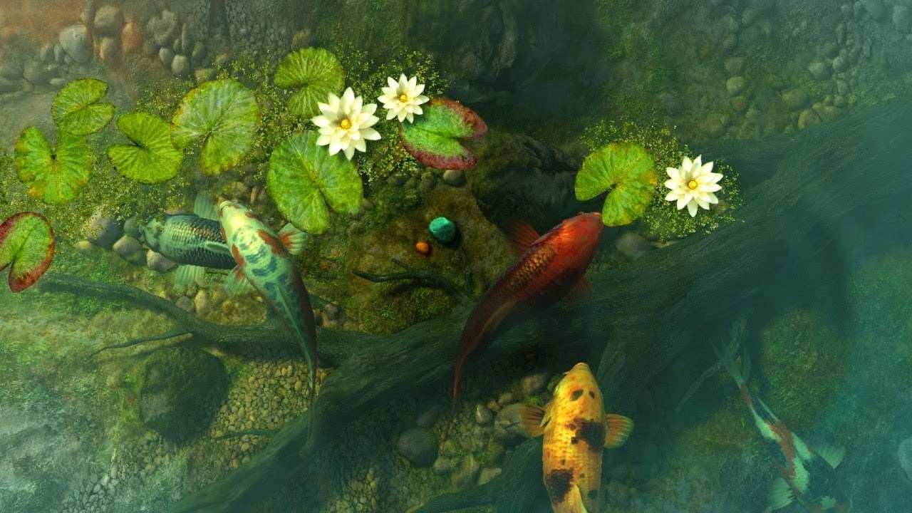 Koi Pond Garden 3d Screensaver & Live Wallpaper Hd - Koi Fish Pond Wallpaper Hd , HD Wallpaper & Backgrounds