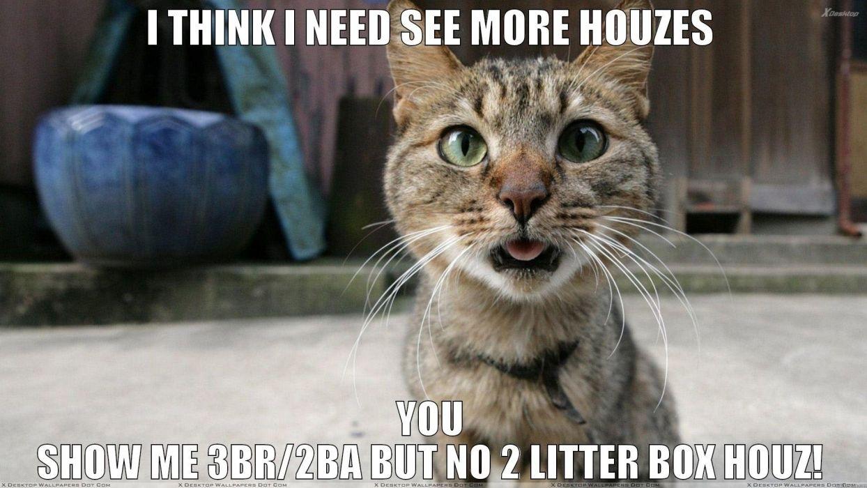 The Best Grumpy Cat Meme Wallpaper - Funny Cat Wallpaper Memes , HD Wallpaper & Backgrounds