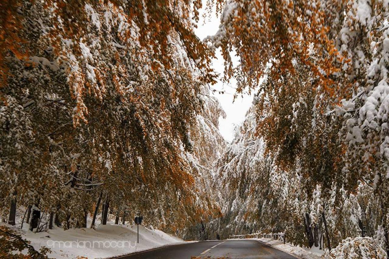 182 1823357 iarna grabita ninge toamne snow fall free desktop