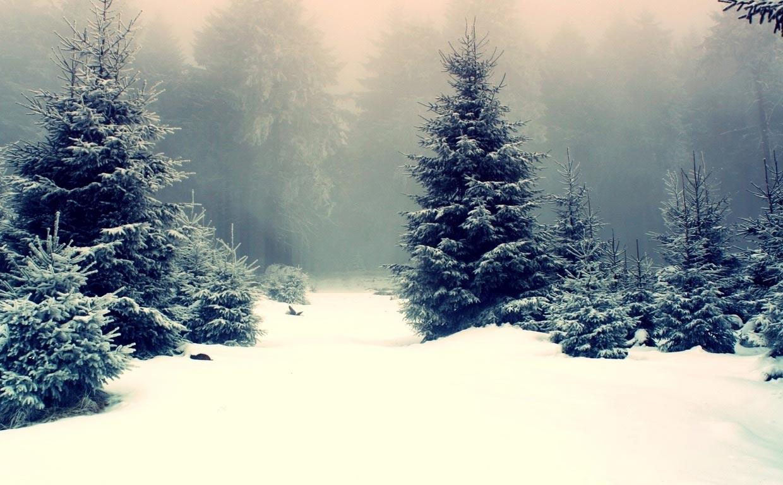 Winter Tumblr Themes Wallpaper Fir Tree In Snow 1823821