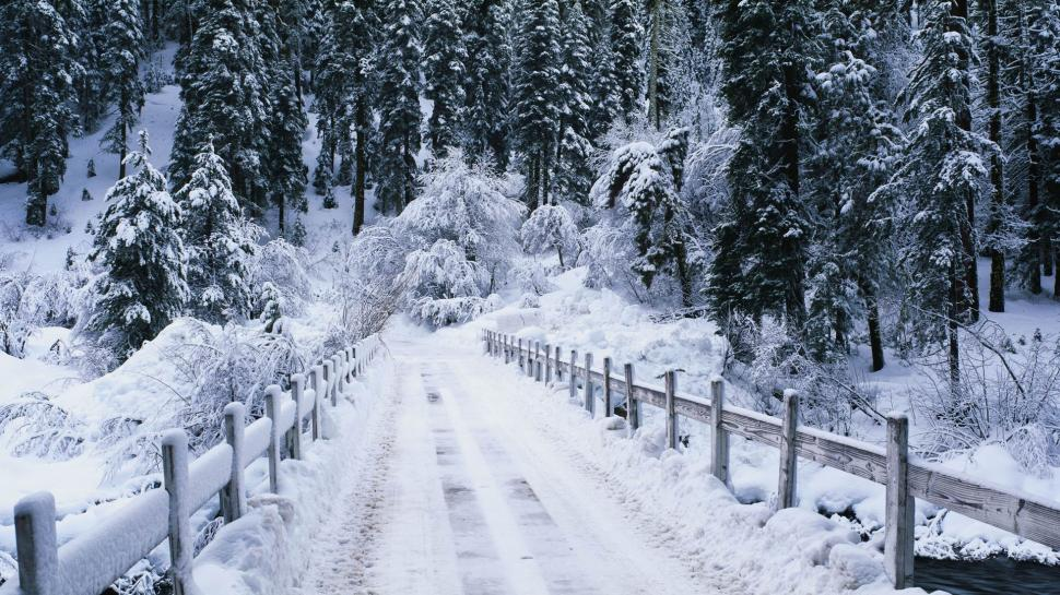 Snowy Snow Winter Trees Fence Path Nature Wallpaper