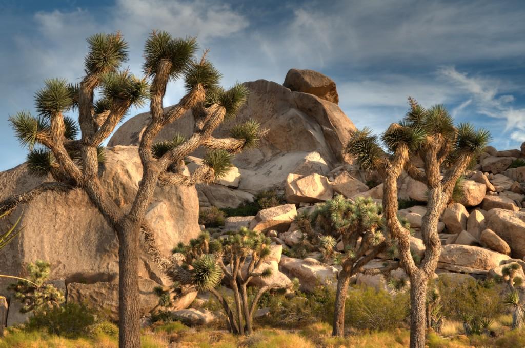 Joshua Tree Wallpapers Hd Hidden Valley National Park 1843318 Hd Wallpaper Backgrounds Download