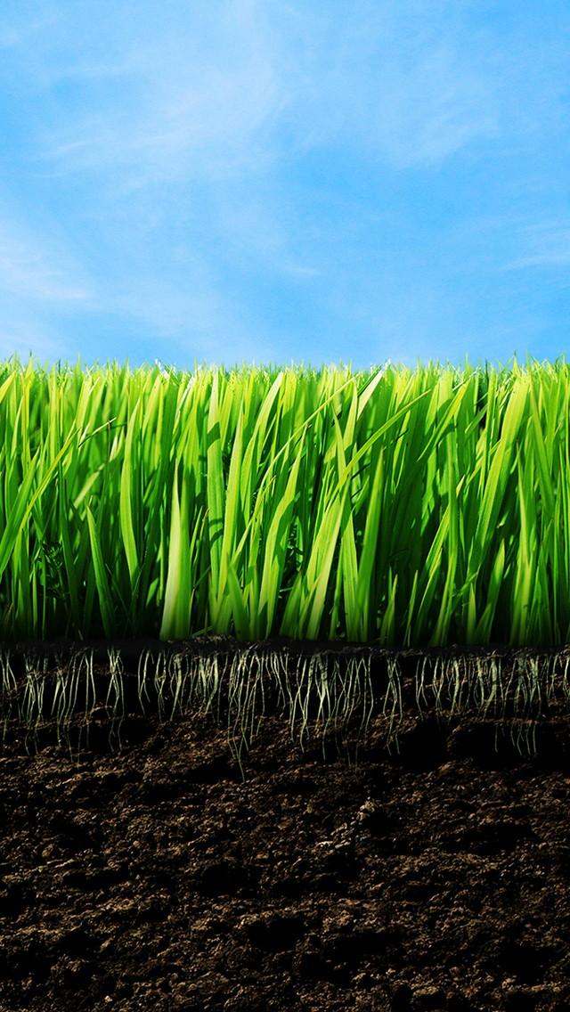 Empty Grass Iphone 5 Wallpaper - Grass Wallpaper Iphone 5 , HD Wallpaper & Backgrounds