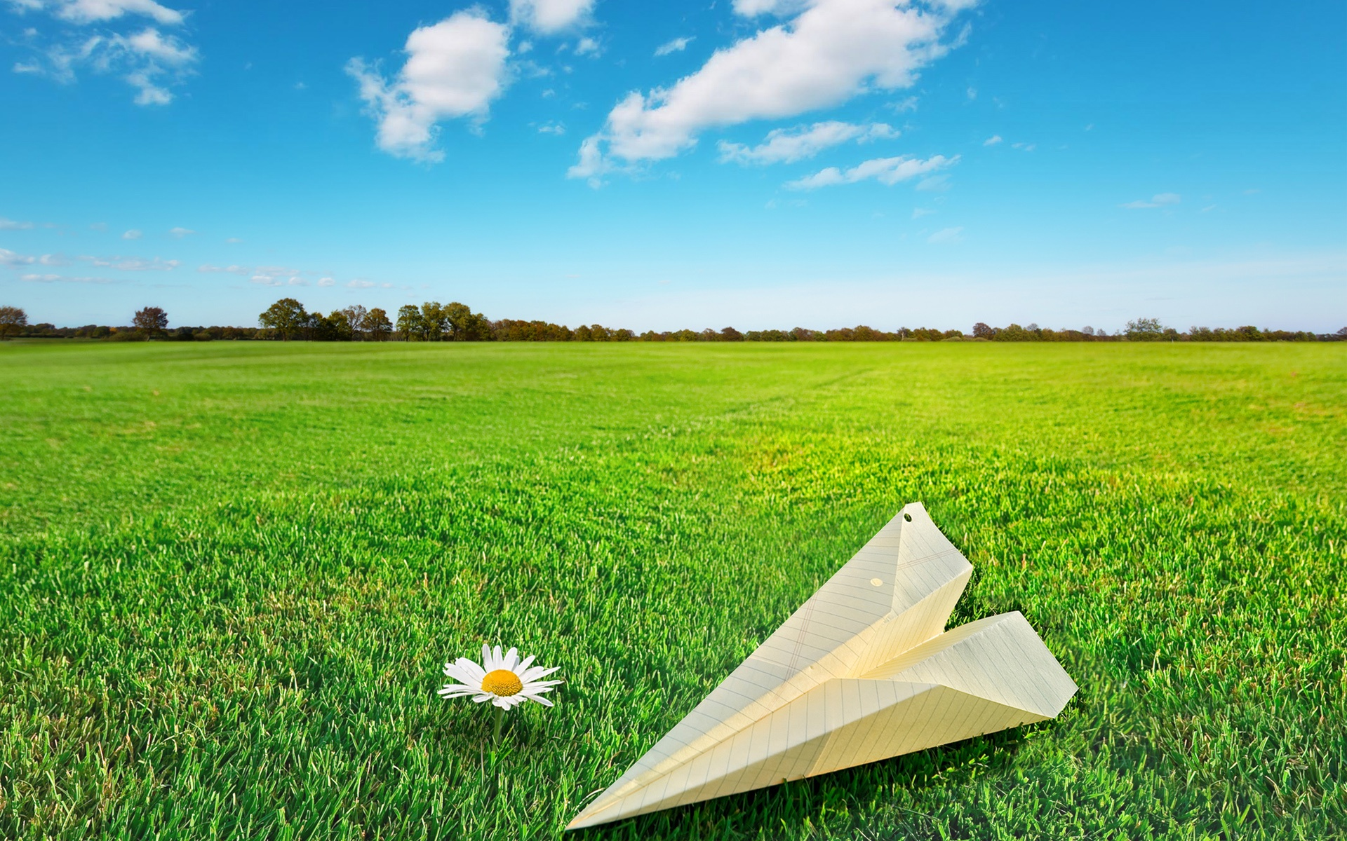Paper Rocket Flower On Green Grass - Natural Beauty , HD Wallpaper & Backgrounds