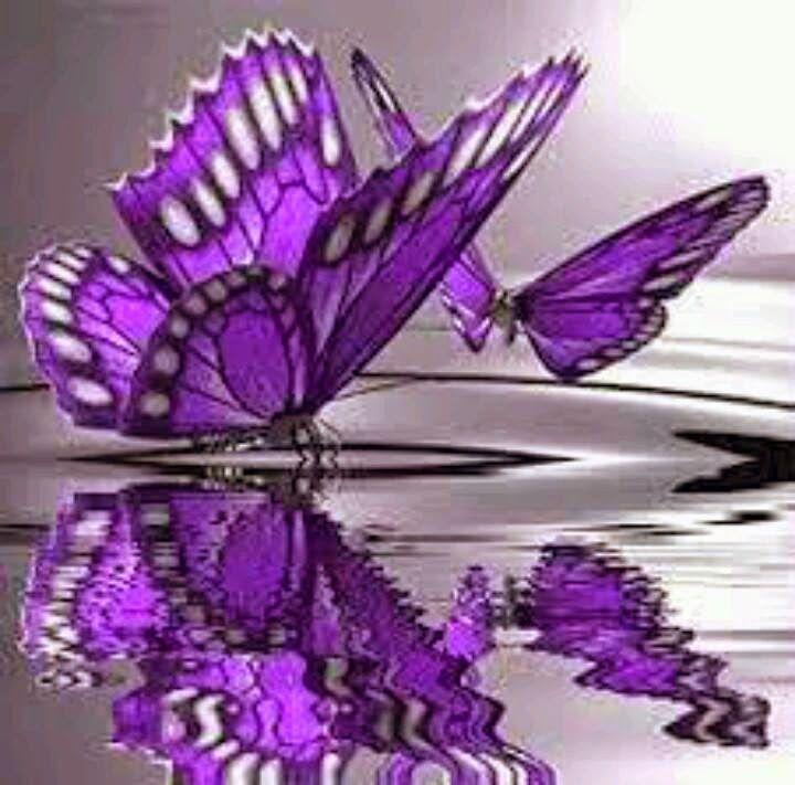 Butterflies Cute Wallpapers Free Download, Cute Butterflies - Beautiful Butterfly Wallpapers Free Download , HD Wallpaper & Backgrounds