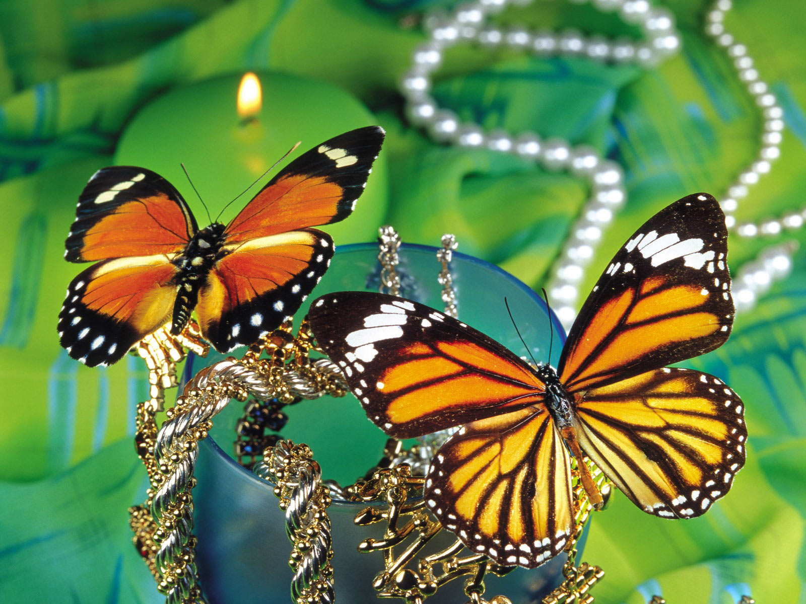 Beautiful Butterfly Wallpapers Free Download - Butterfly Singular Or Plural , HD Wallpaper & Backgrounds