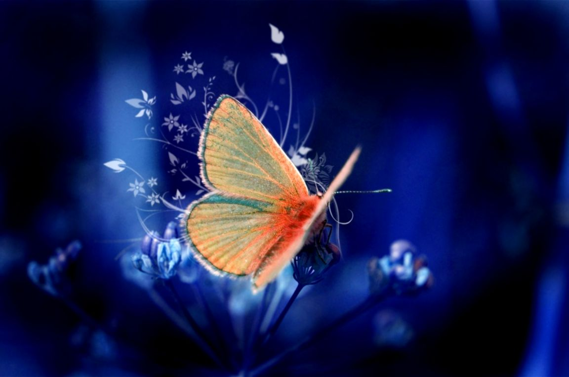 55 Colorful 【butterfly】hd Free Images Wallpapers Download - Full Hd Images Of Flowers And Butterflies , HD Wallpaper & Backgrounds