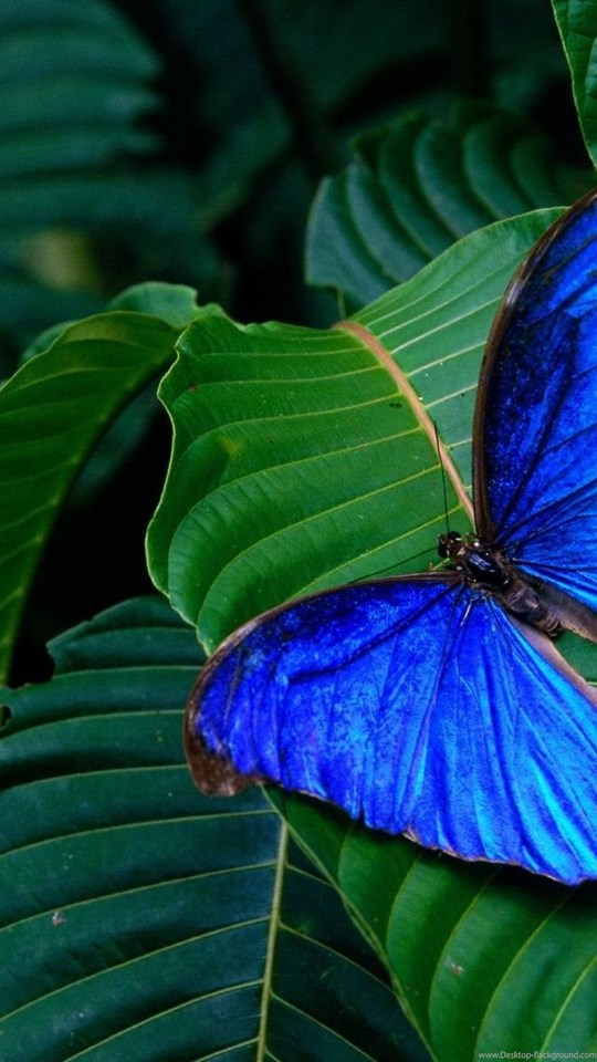 Android Hd - Nature And Butterfly Hd , HD Wallpaper & Backgrounds
