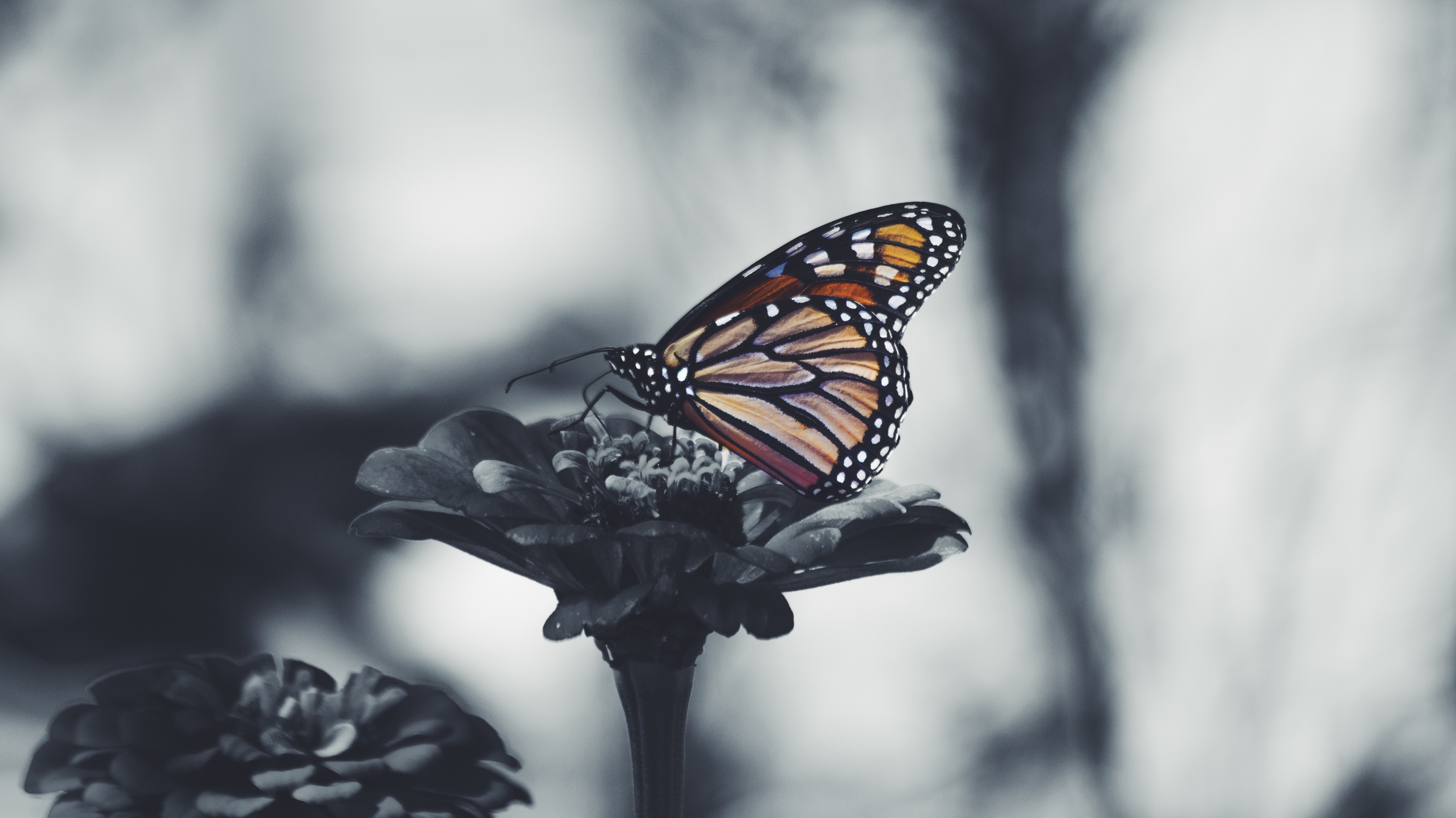 Butterfly 5k Black And White Desktop Background Wallpaper Butterflies Depression 1853883 Hd Wallpaper Backgrounds Download