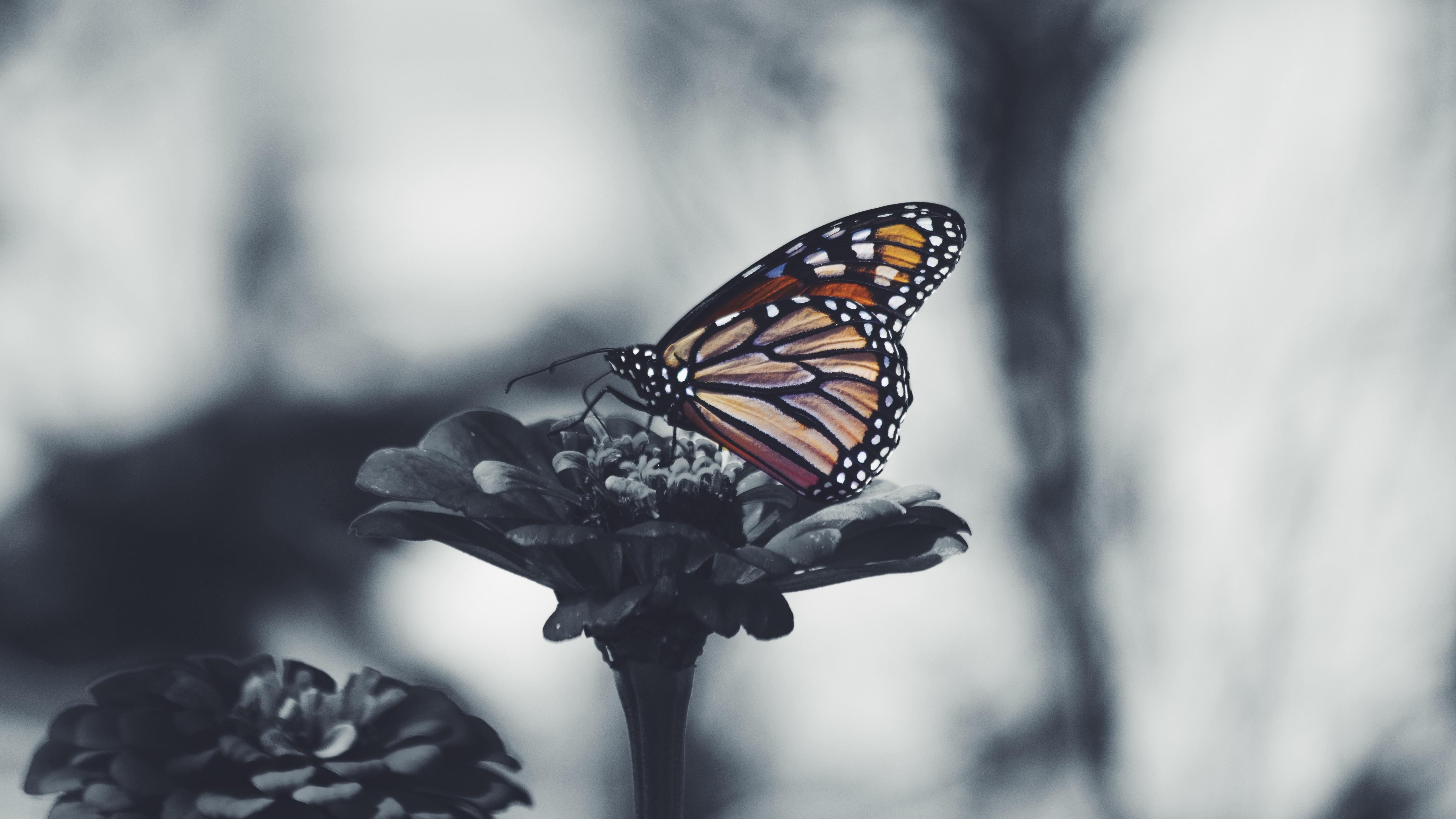 Butterfly 5k Black And White Desktop Background Wallpaper - Butterflies Depression , HD Wallpaper & Backgrounds