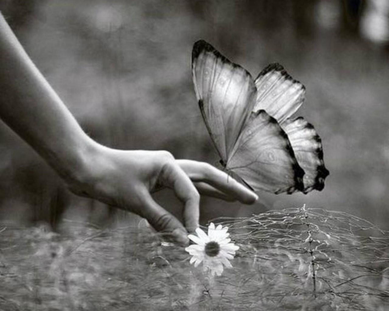 Flower White Butterfly Black Hand Wallpaper Pictures - Flower Butterfly Black And White , HD Wallpaper & Backgrounds