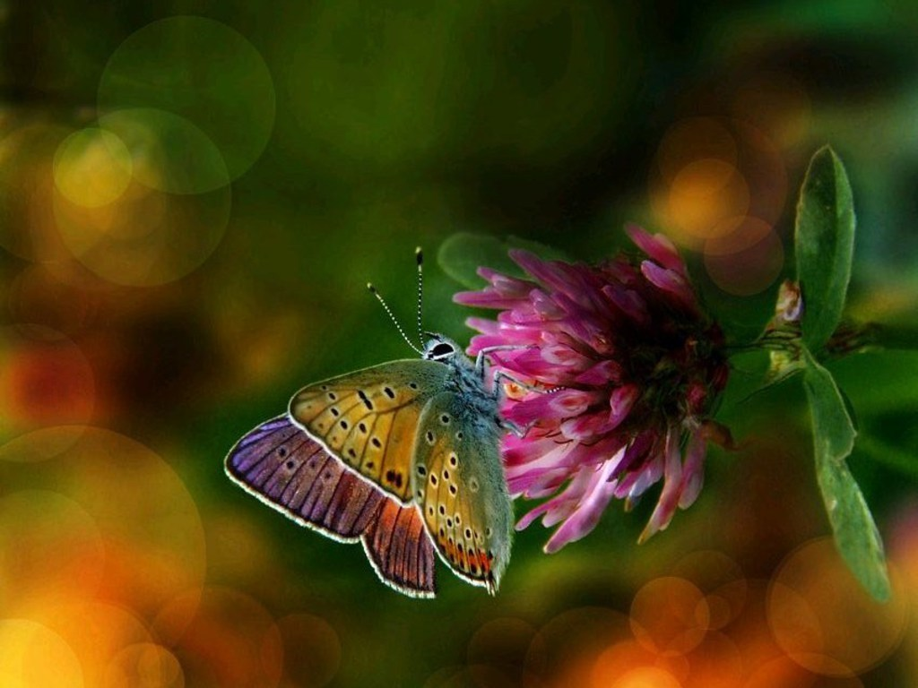 Colorful Butterfly Backgrounds 14 Background Wallpaper - Colorful Flower And Butterfly , HD Wallpaper & Backgrounds