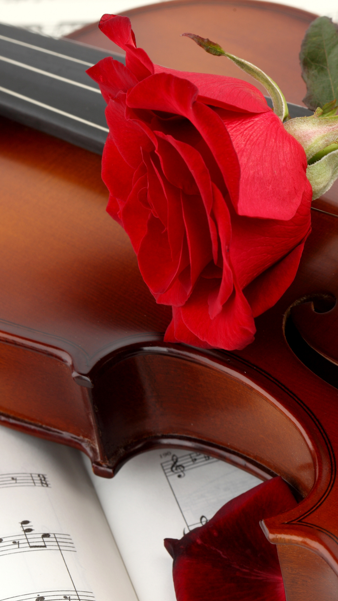 Bowed String Instrument Red Black Rose Violin Rose Violin Images With Flowers 1854850 Hd Wallpaper Backgrounds Download