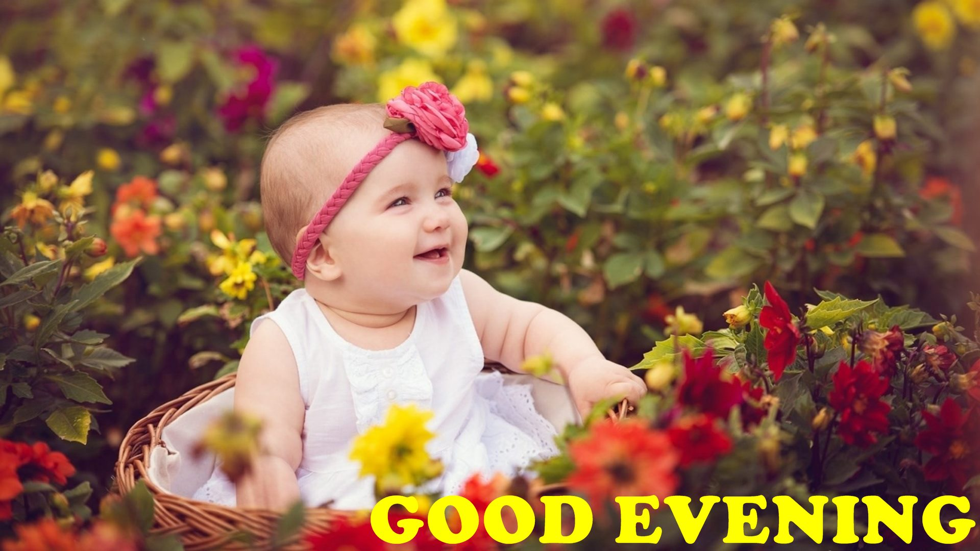 Good Evening Wth Cute Baby Girl And Flowers Hd Wallpaper - Baby Whatsapp Dp For Girl , HD Wallpaper & Backgrounds