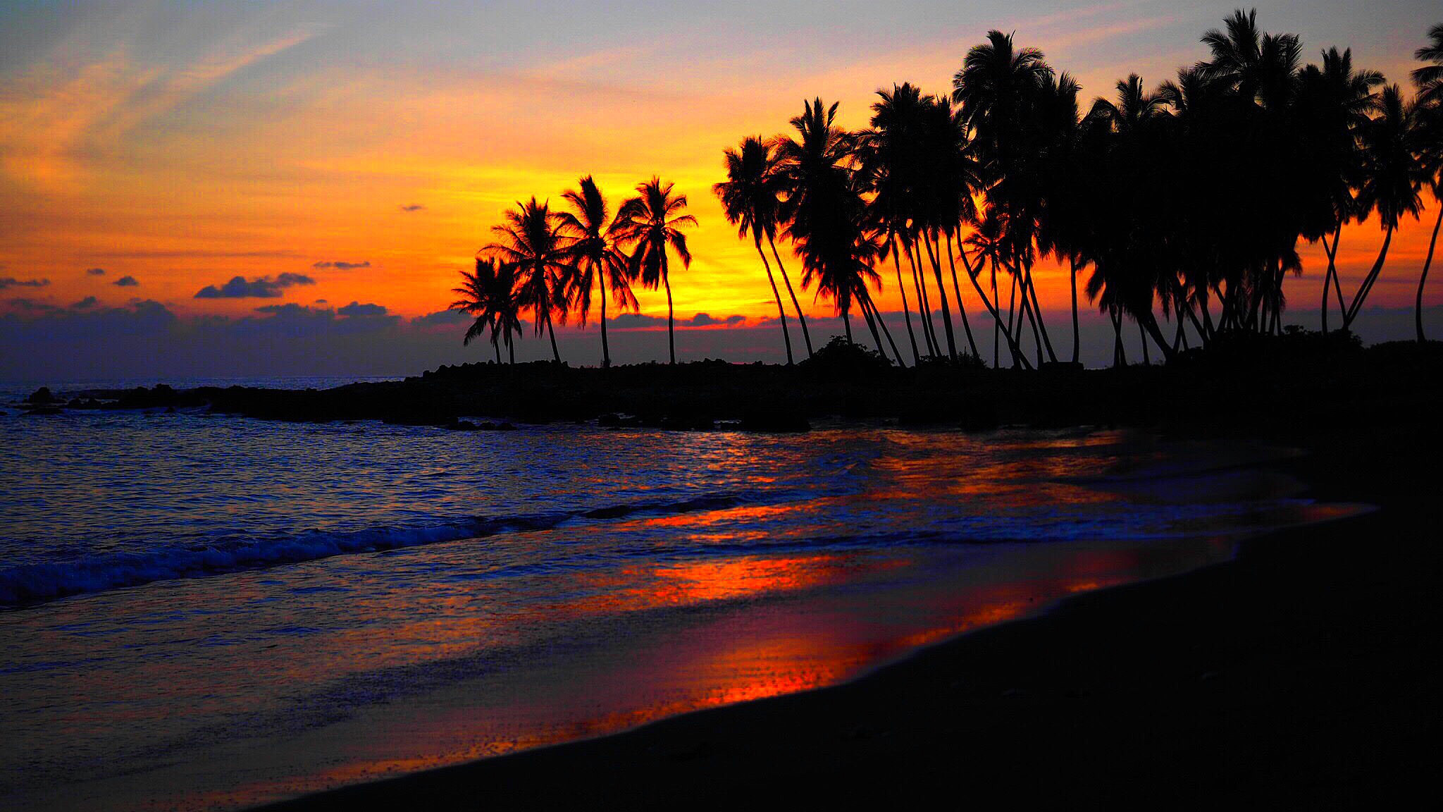 Format Pc Beach Sunset Palm Tree 1857214 Hd Wallpaper