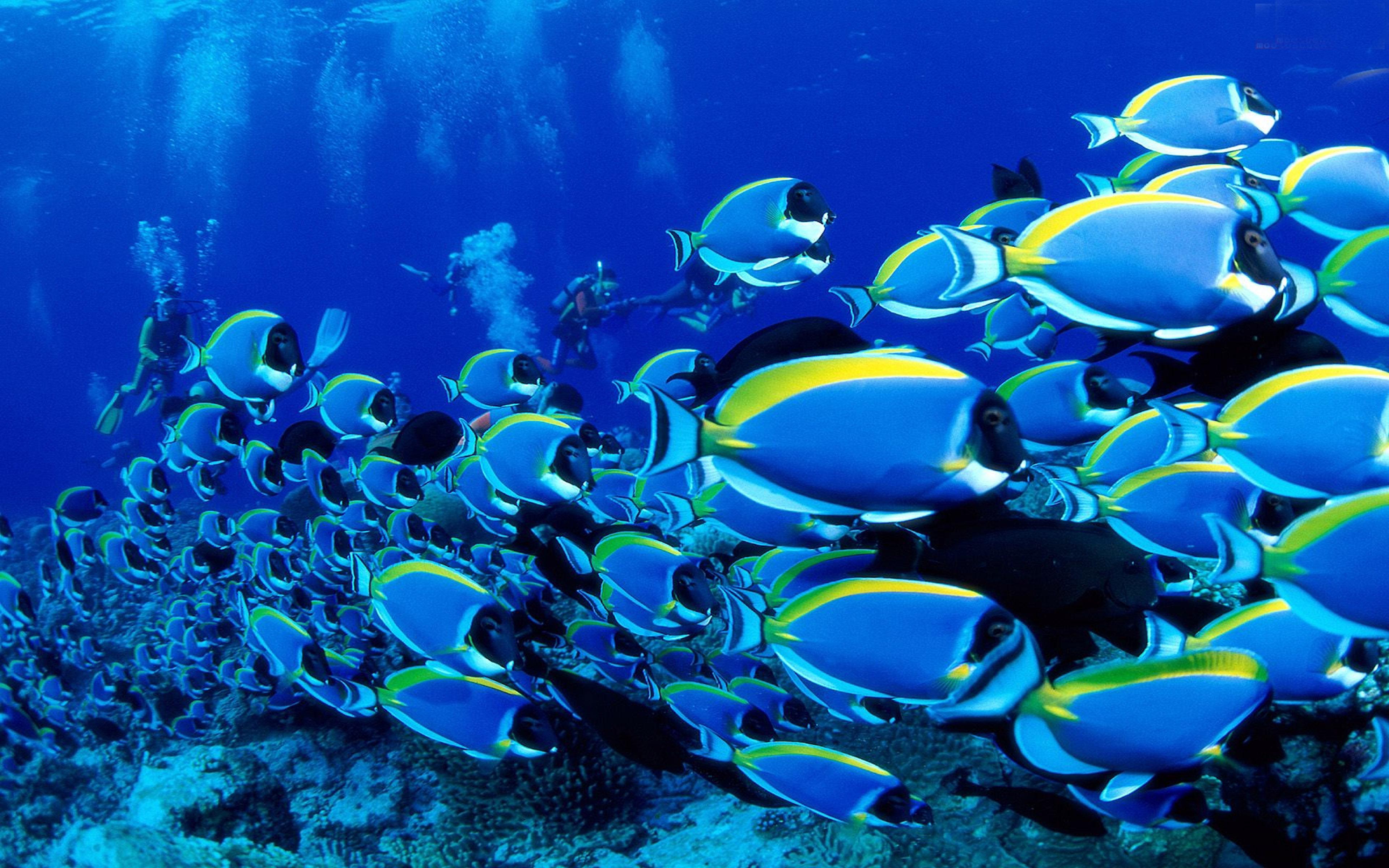 Animals Ocean Tropical Fish Wallpaper Background Hd - Wallpaper , HD Wallpaper & Backgrounds
