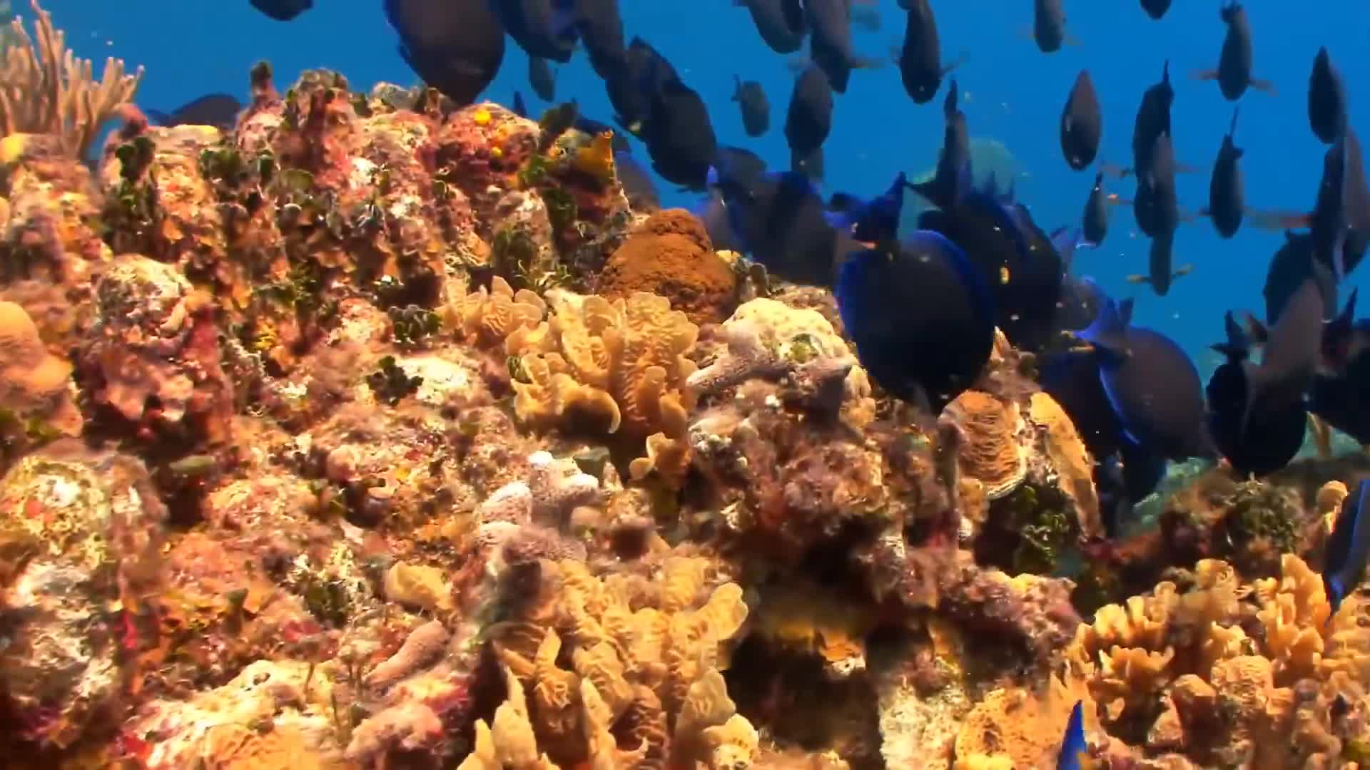 2 Hours, Beautiful, Coral, Coral Reef, Fish, Ocean, - Marine Biology , HD Wallpaper & Backgrounds