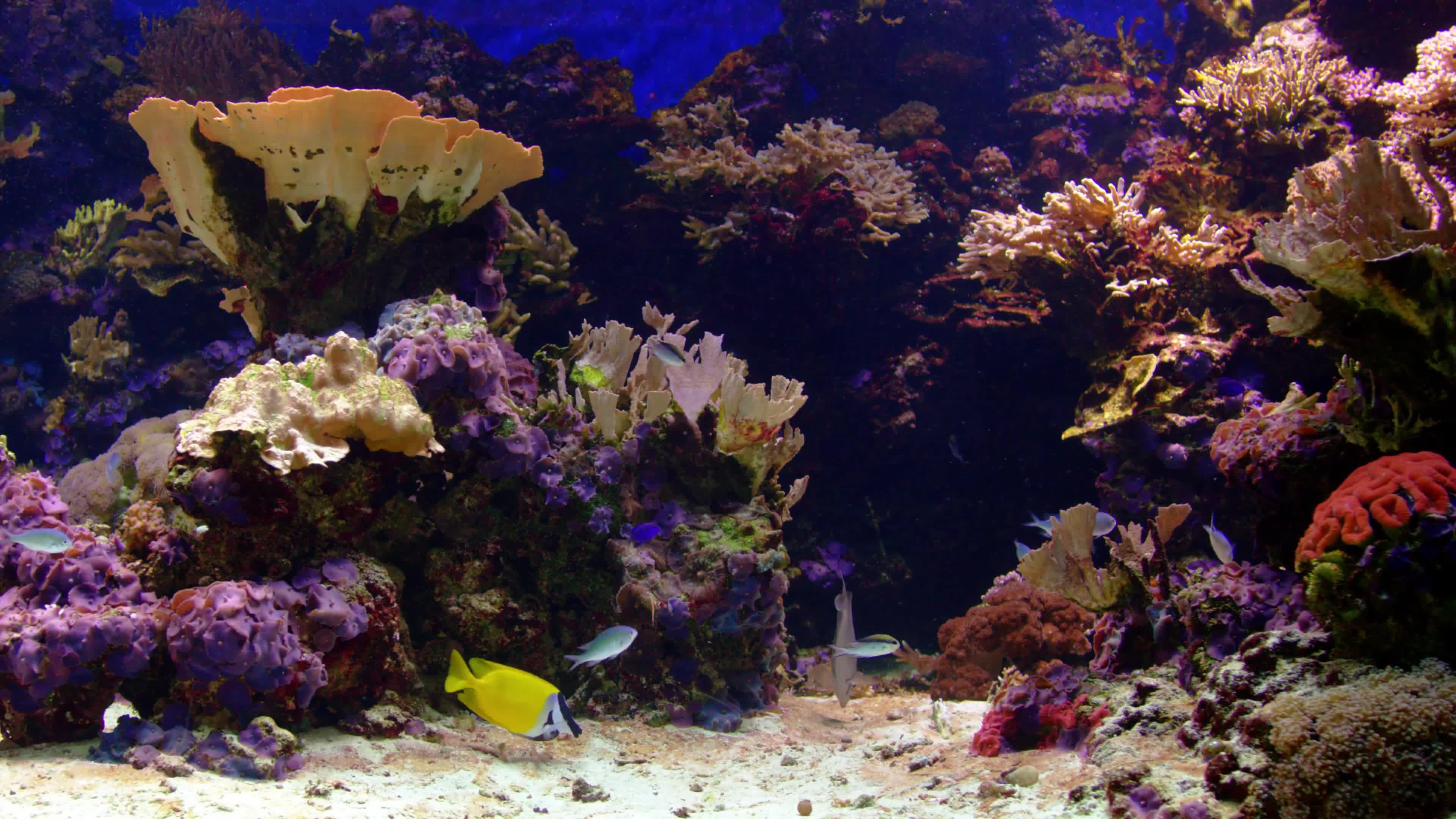 4k Fish Wallpaper Fish 2 Gifs Coral Reef 1857753 Hd Wallpaper Backgrounds Download
