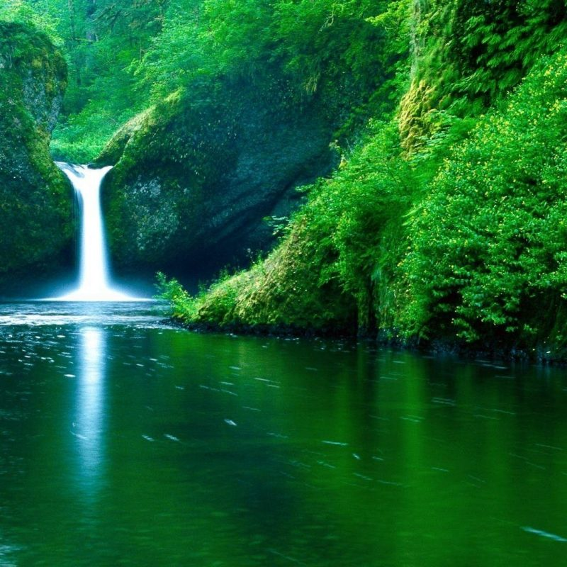 10 Best Nature Hd Wallpaper 1920x1080 Full Hd 1080p Green