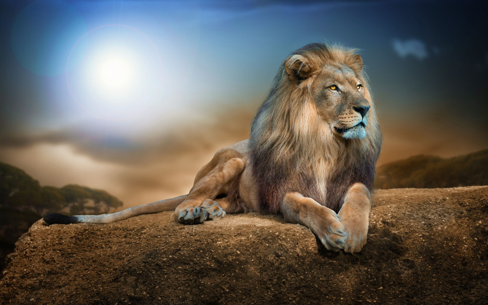 Wallpaper Lion - 1080p Lion Full Hd , HD Wallpaper & Backgrounds