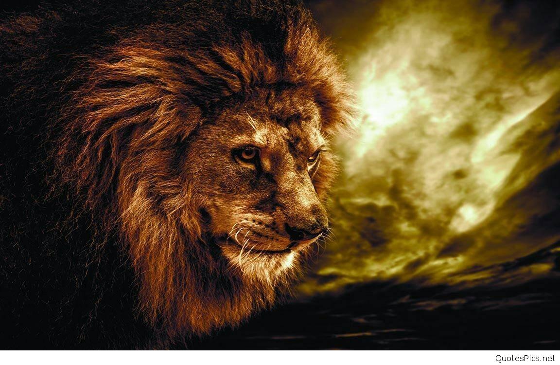 Lion Roaring Hd Wallpapers - Lion Roar Images Hd , HD Wallpaper & Backgrounds