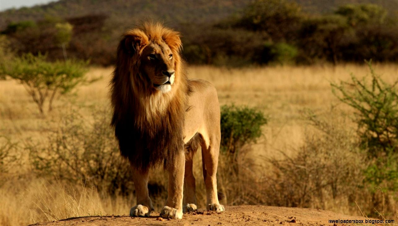 Roaring - Animals That Moves Fast , HD Wallpaper & Backgrounds