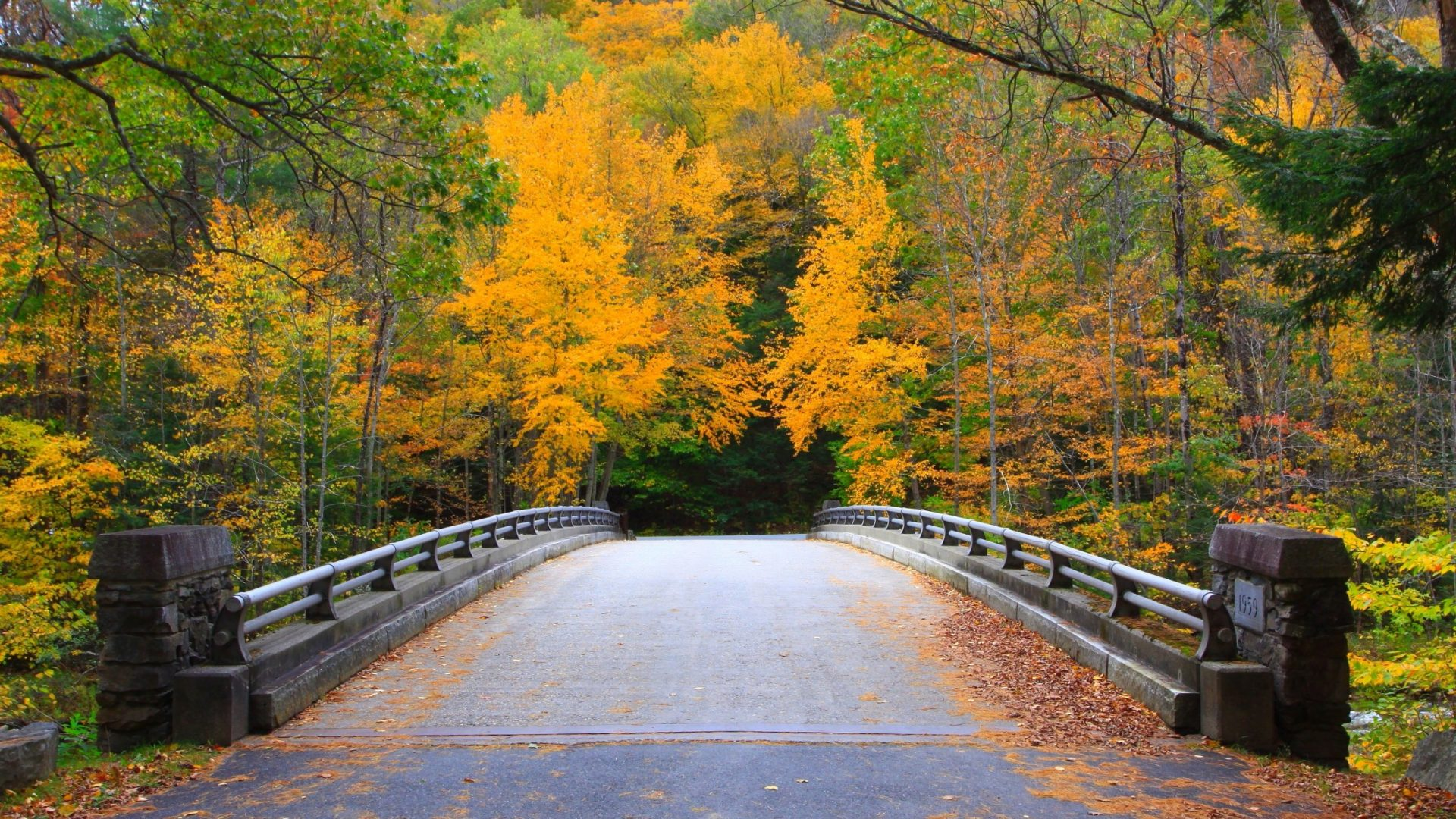 Bridge Massachusetts Colorful Autumn Trees Nature Forest