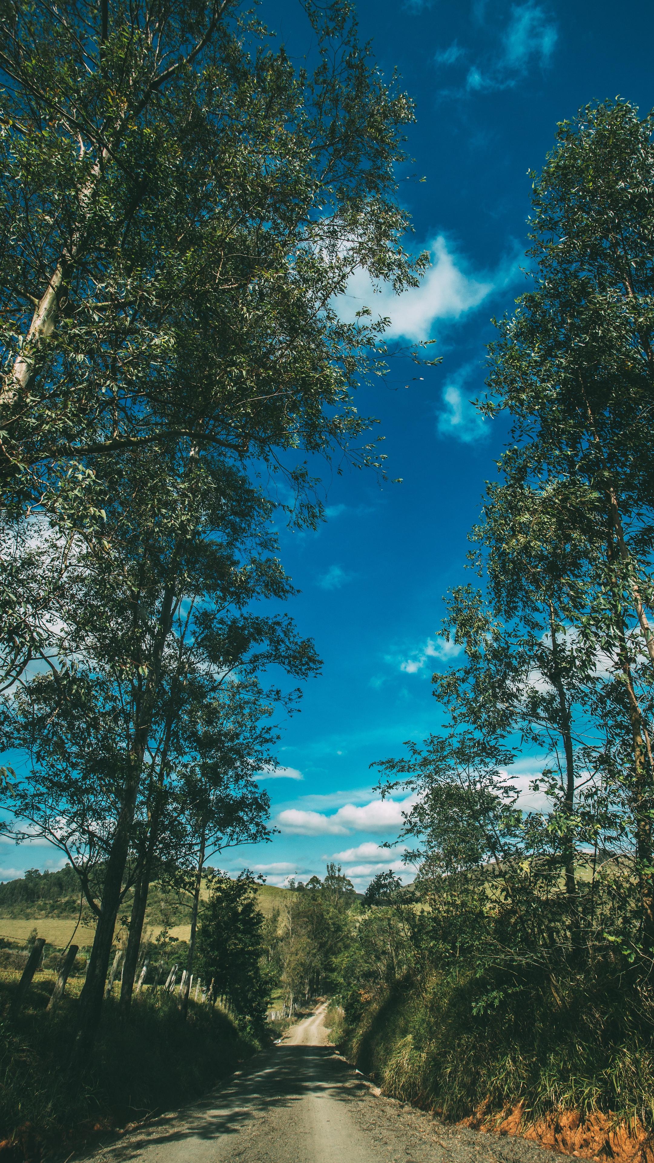 Wallpaper Summer Road Trees Sky Sunny Summer Vibes Wallpaper