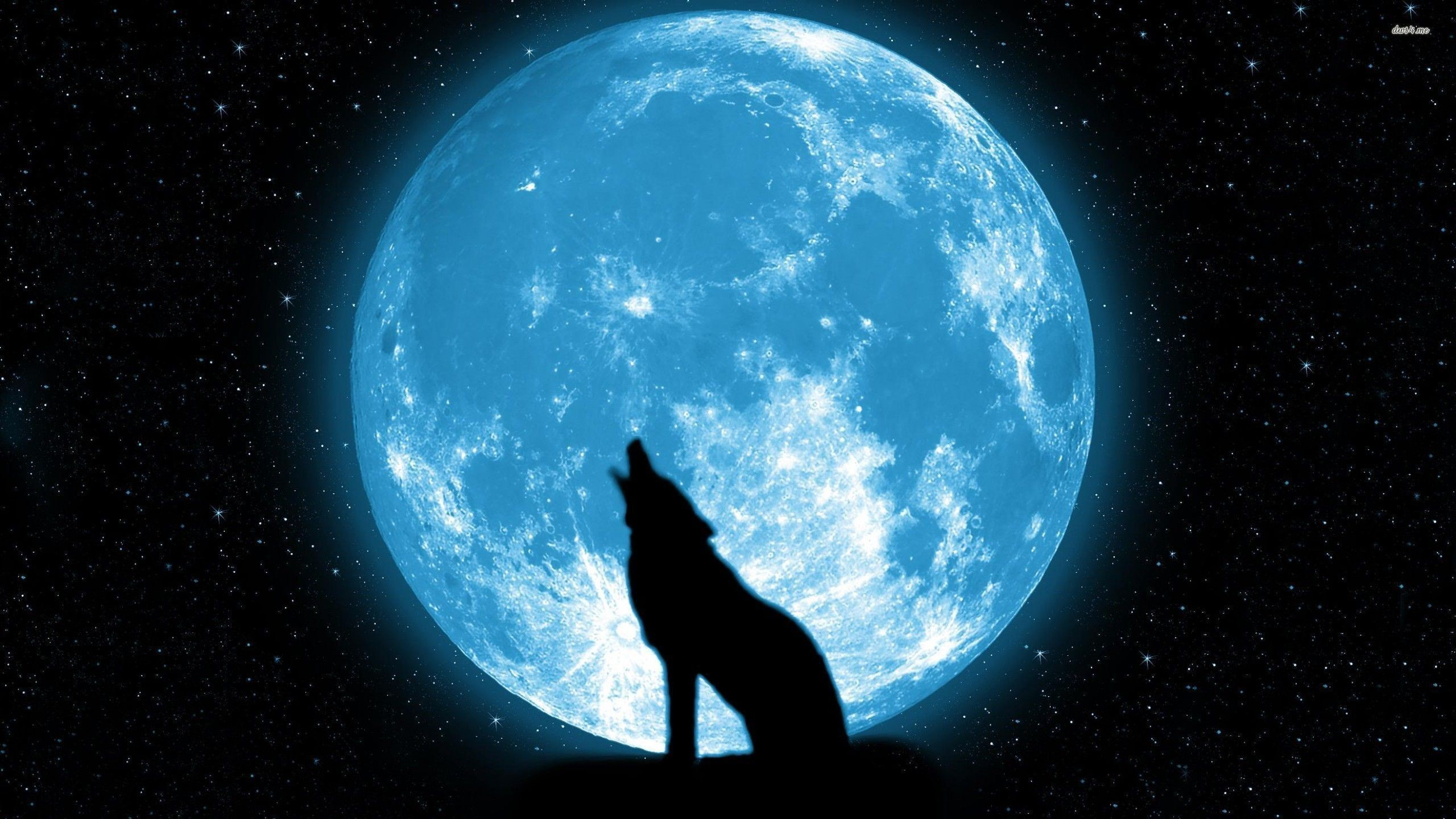 2560x1440 Blue Moon Wallpaper Wolf Howling At The Moon Hd 1867596 Hd Wallpaper Backgrounds Download