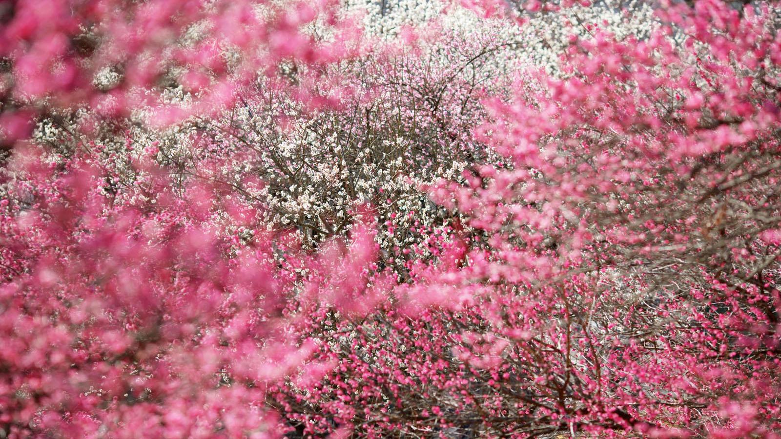 Spring Flowers Wallpaper , HD Wallpaper & Backgrounds