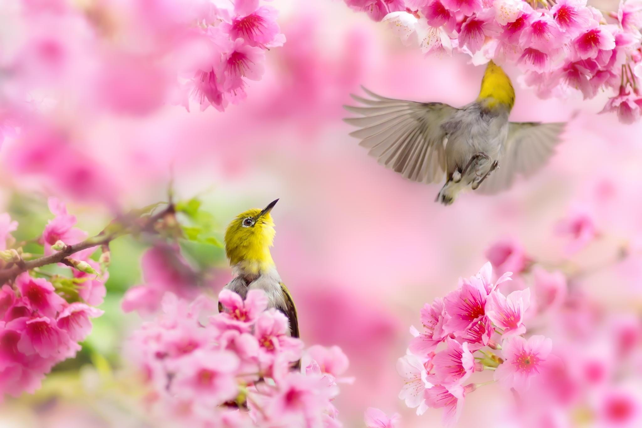 Free Spring Wallpapers Elegant Desktop Wallpaper Free - Lovely Flowers In Nature , HD Wallpaper & Backgrounds