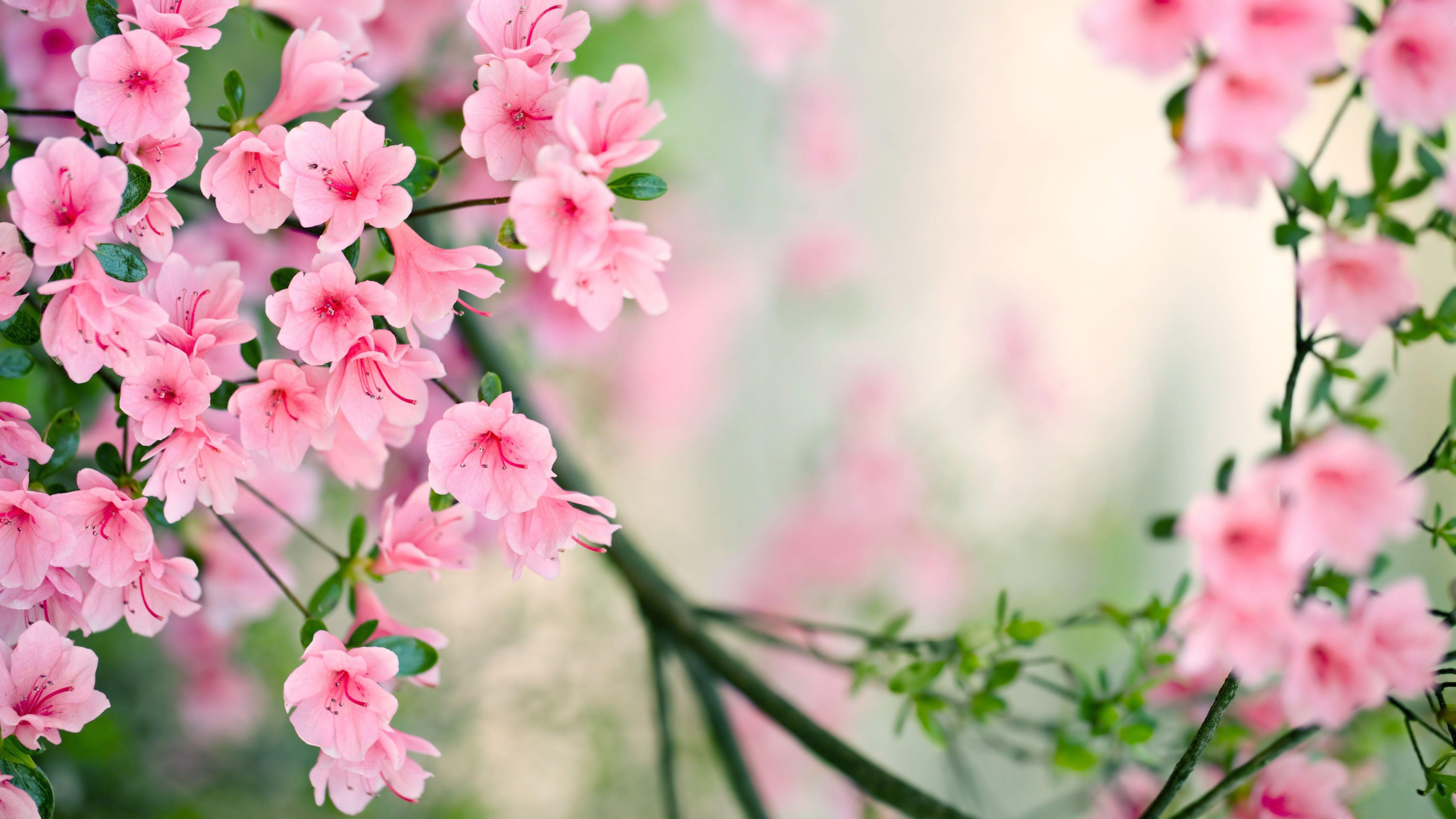 Spring - Beautiful Real Flowers Background , HD Wallpaper & Backgrounds