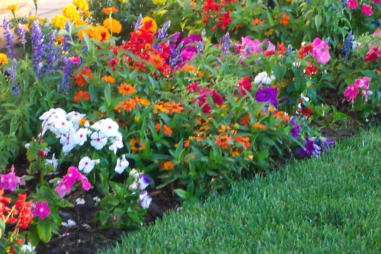 Flower Garden Beautiful Colors Spring Flowers Wallpapers - Perennial Flower Gardens Sun , HD Wallpaper & Backgrounds