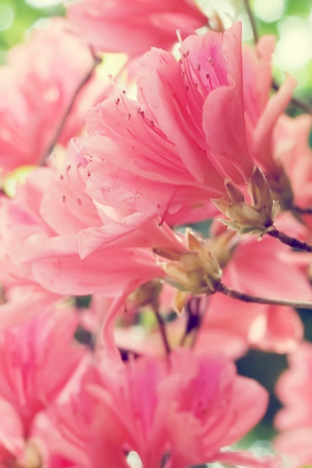 Download Now - Pretty Profile Pictures Of Flowers , HD Wallpaper & Backgrounds