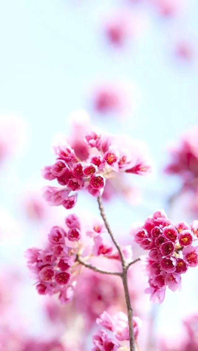Blue Flowered Wallpaper Flower Wallpaper For Or Android