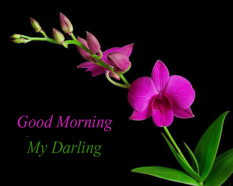 Flower Pictures Flowers Good Morning Good Morning With Slogan 1879010 Hd Wallpaper Backgrounds Download