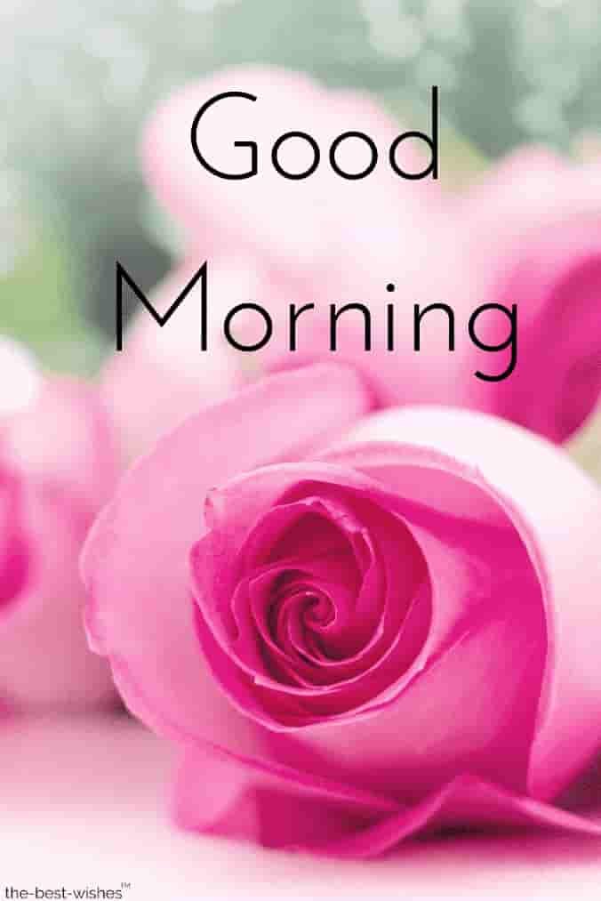 Gud Mrng Images With Roses Good Morning My Love Hd
