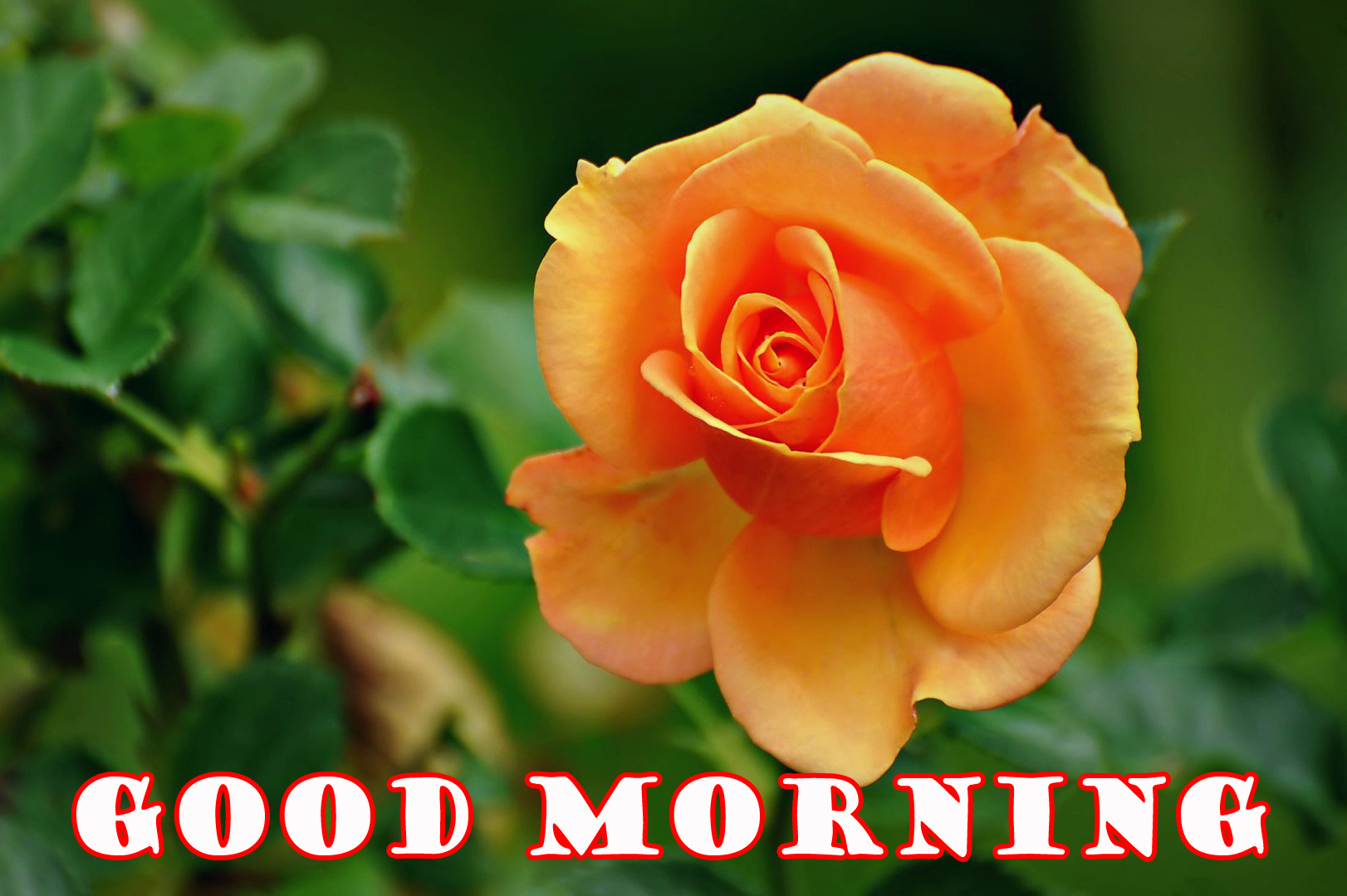 187 1879460 good morning flowers wallpaper pictures images free orange