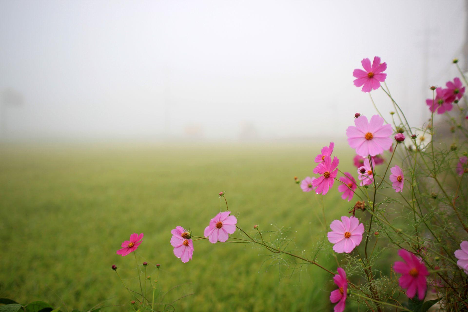 Flower Nature Flower Good Morning Wallpaper Hd