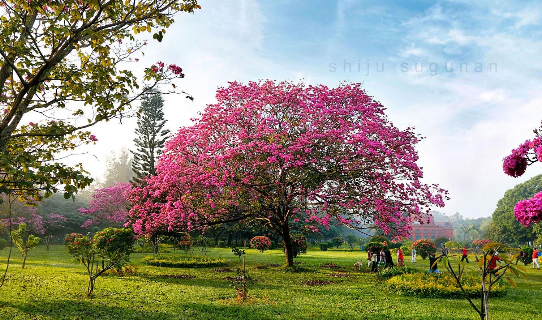 Beautiful Pics Of Bangalore , HD Wallpaper & Backgrounds