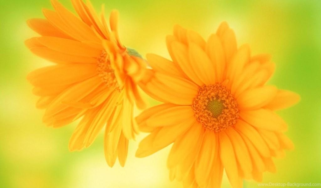 Playstation - - So Beautiful Flower , HD Wallpaper & Backgrounds