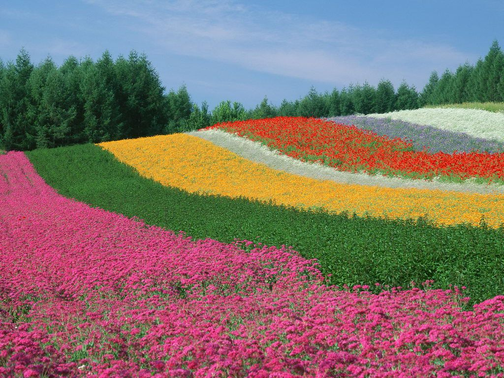 Most Beautiful Images Of Nature - World Famous Flower Garden , HD Wallpaper & Backgrounds