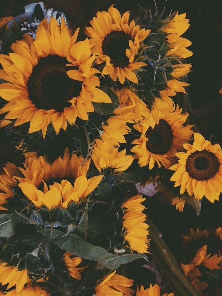 Girasol Sunflowers Tumblr Sunflower Wallpaper Phone