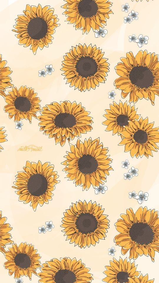 Sunflowers Background Phone Backgrounds Wallpaper Aesthetic Sunflower 1885287 Hd Wallpaper Backgrounds Download