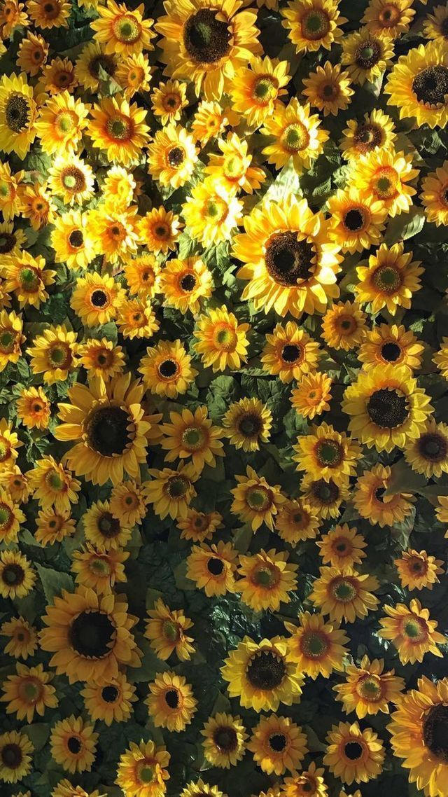 Flowers Sunflower Aesthetic Tumblr Laptop Wallpaper Aesthetic