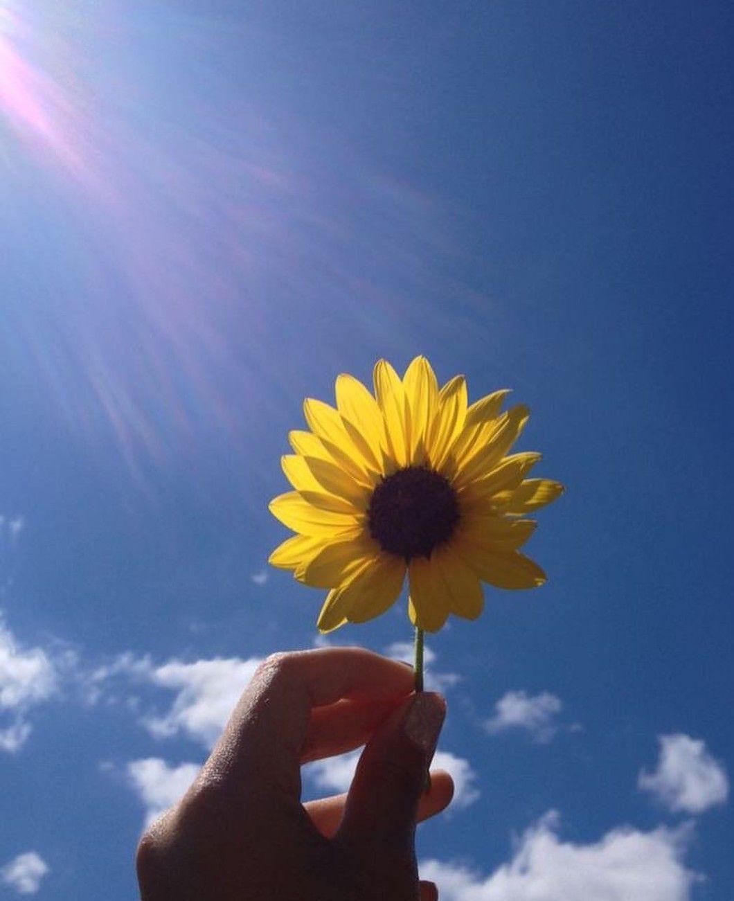 Download Sunflower Wallpaper, Aesthetic Wallpapers, Sun ...