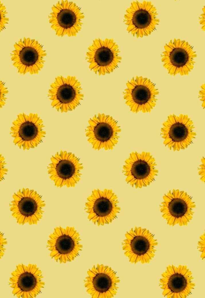 Wallpaper Sunflowers Sunflowers Wallpaper Iphone 1885463
