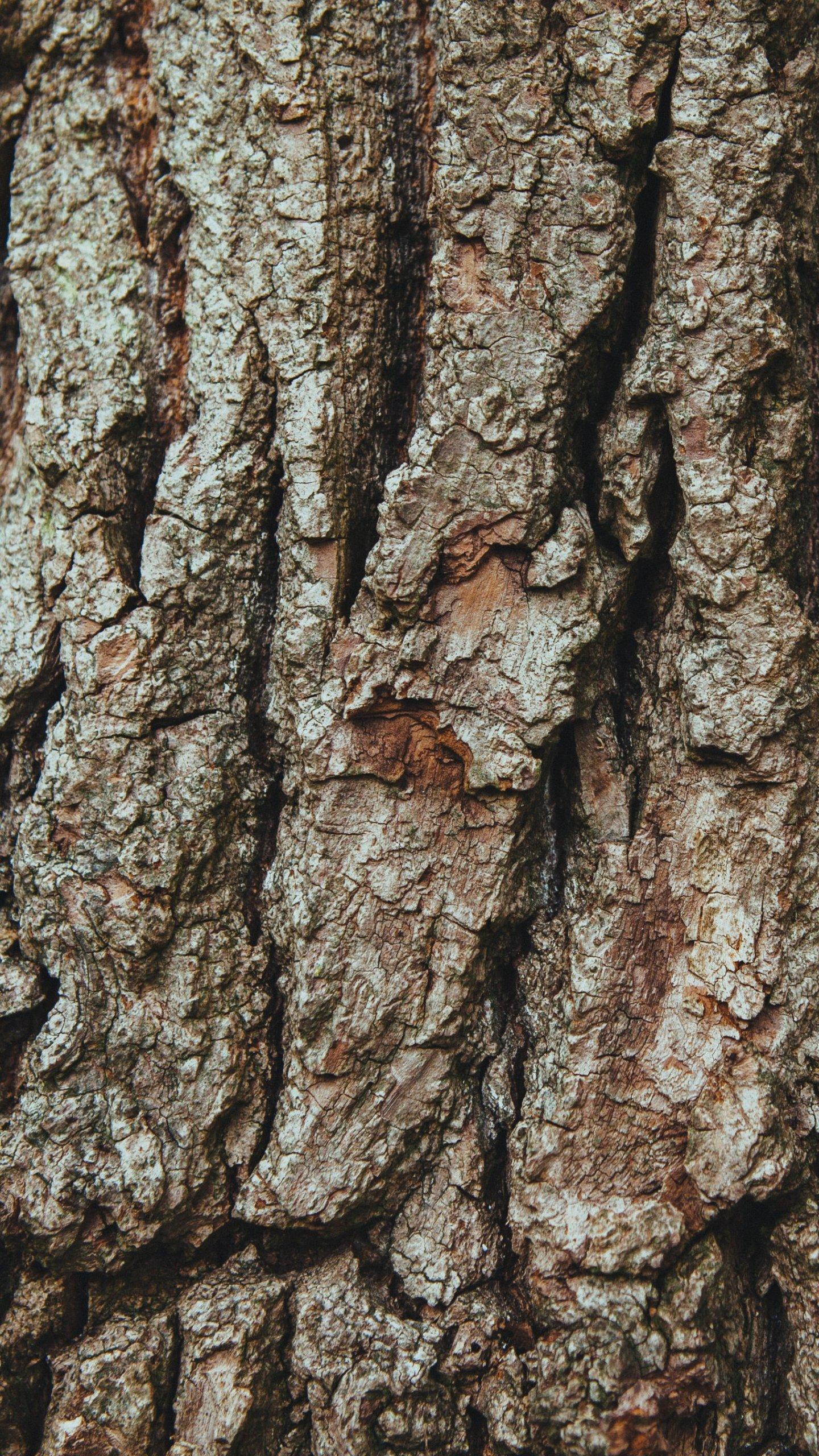 Oak Tree Wallpaper Iphone , HD Wallpaper & Backgrounds